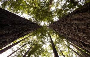 Mastering FSC-Certified Wood in Green Building